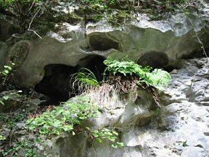 道端の岩も不気味に侵食されたものが多い。 ミニ鍾乳洞の洞口だらけである。