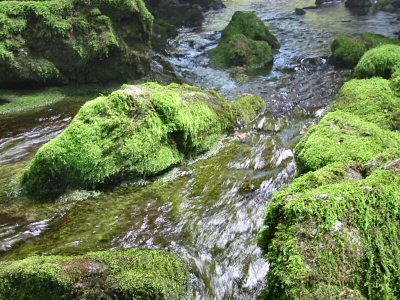 洞口から流れ出す水は清澄な流れとなって川へ注ぐ。 同時に膨大な冷気の塊が流れ出していて、沢筋の1-1.5m上までの層をなしているのがよく判る。 流れ出しの水量が意外と少ない。 地中の川へ流れ込んでしまう分があるからである。