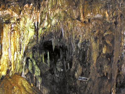 「石化の樹林」と呼ばれる一角は、鍾乳石や石筍がたいへんな密度で埋まっている。