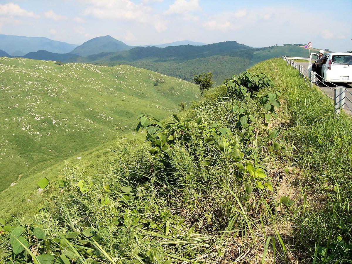 秋吉台は山上の高原。  標高は約200~400m前後とさほど高くないが、カルスト特有の植生で、まるで霧が峰や美ヶ原のような千数百mクラスの高原に見える。