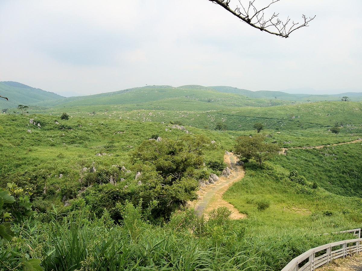 若竹山付近を望む、秋吉台の高原。 あっちにもこっちにもドリーネらしきものがある。