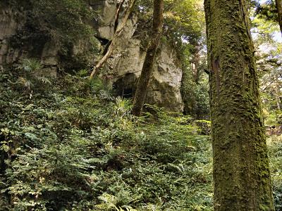 周囲は鬱蒼とした樹林帯の中にある