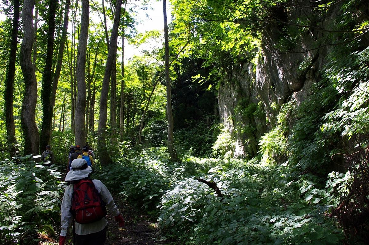 石灰岩の露頭があちこちに。 樹木はサワグルミが多い。