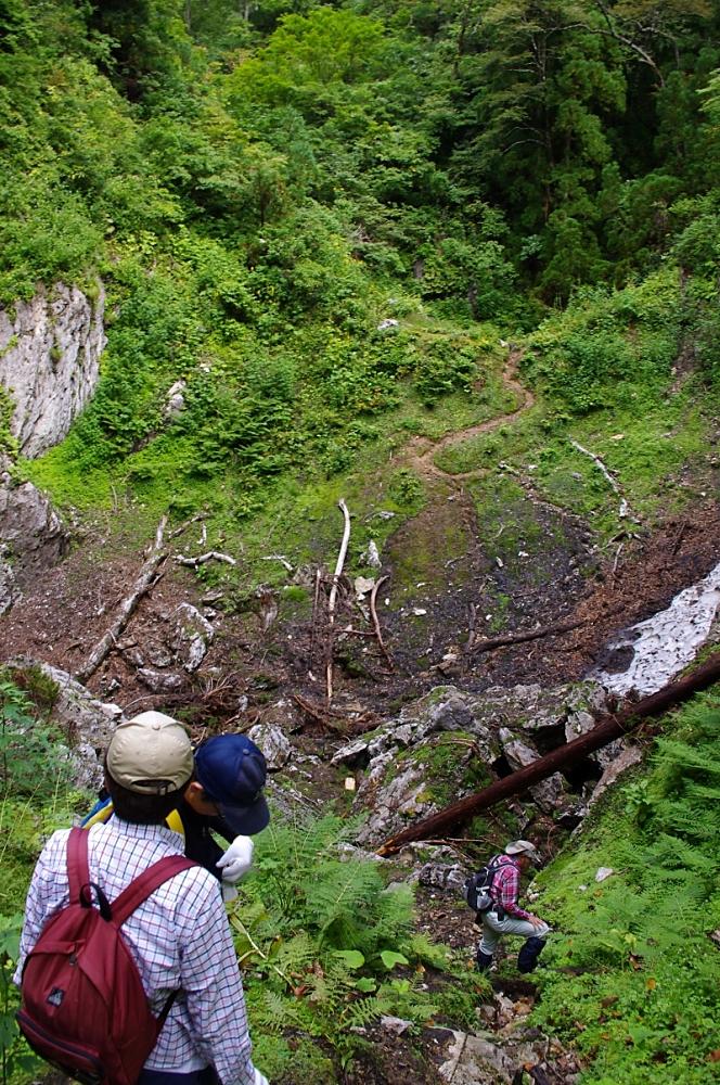 ドリーネの底へ急斜面を降りる。 底には瓦礫や倒木が散乱している。