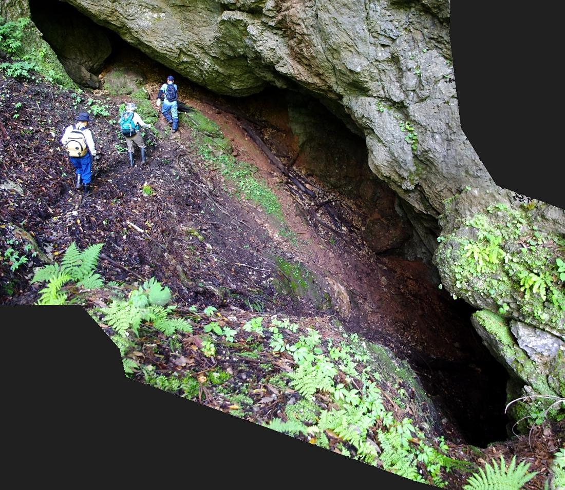 滑りやすい斜面を奥に向かってトラバース。   早い時期にはここは残雪の上。  いかにも斜め竪穴鍾乳洞の側面が抜けてしまった構造。