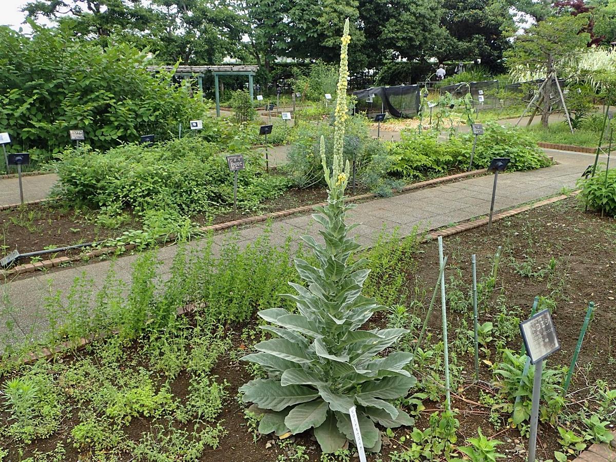 2015年6月 狭山市都市緑化植物園