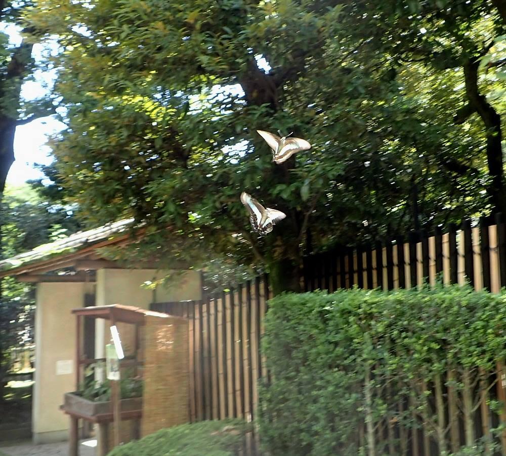 2016年8月 国分寺殿ヶ谷戸庭園