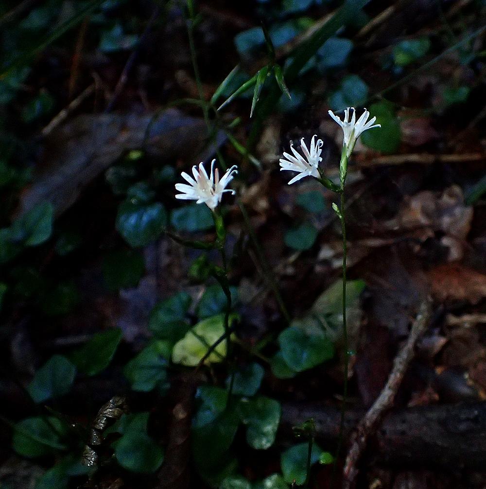 2016/11 狭山丘陵