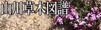 山川草木図譜バナー